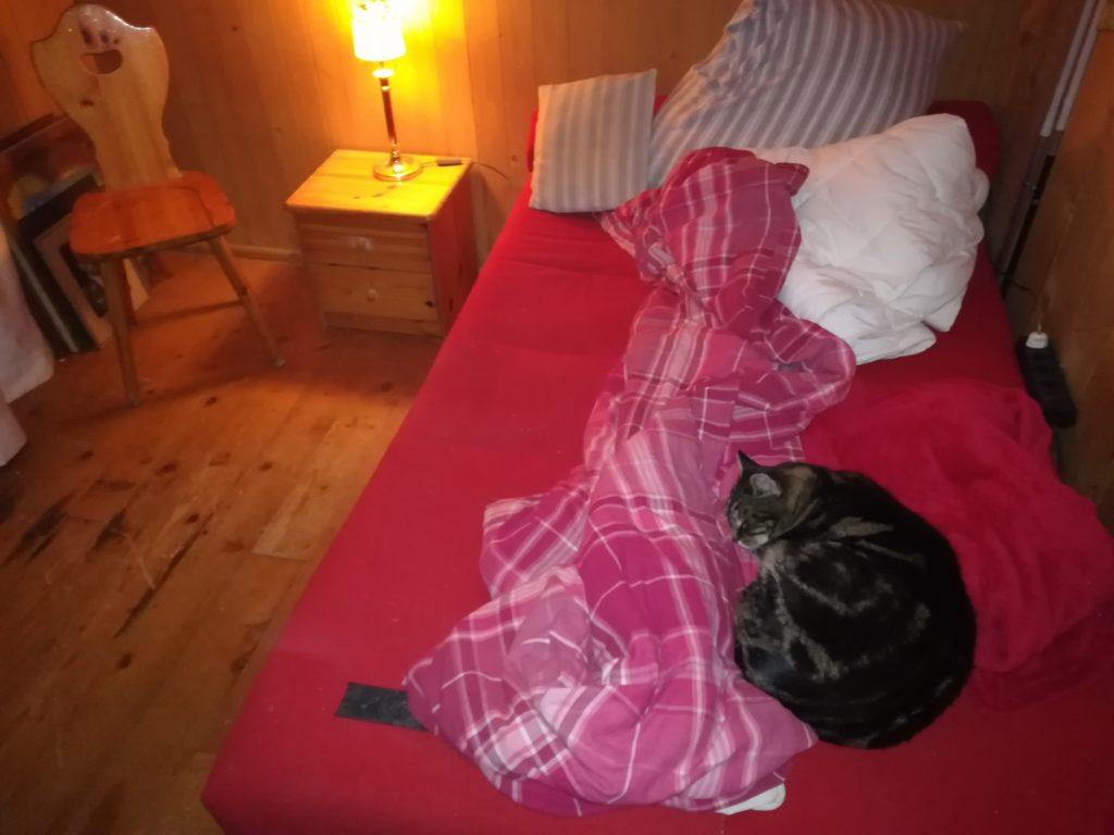Doch das Beste zum Schluß: Katzi hat sich zwar bei der Reparatur des Kleiderschrankt zu Tode gelangweilt, aber fühlt sich immer noch im Raum sehr wohl : - ) Na, wenn das nichts ist...