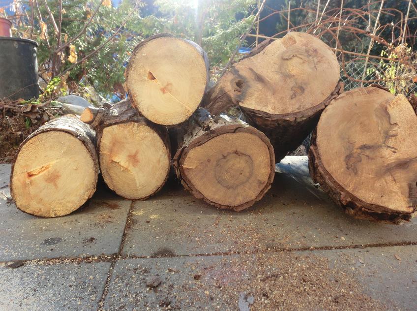 Gesägtes Holz gibt gleich mehrfach warm (Foto Remo Maßat)
